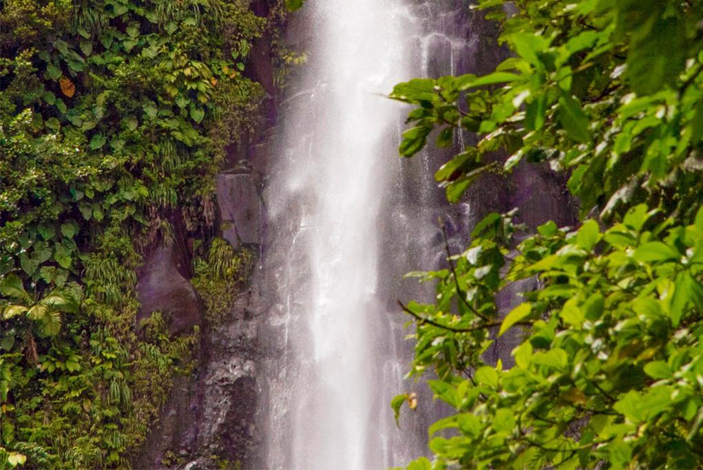 Sendero Agua Blanca y Cascada - Ilhabela