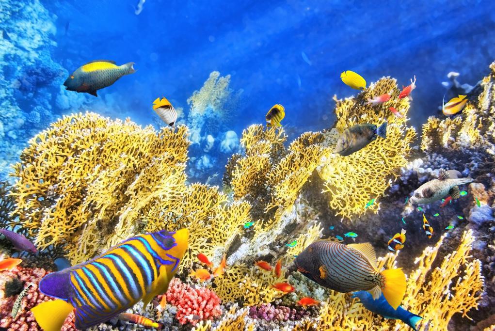 Bari Reef - Kralendijk