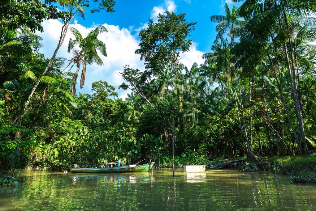 Excursión por el río Amazonas - Manaus - Amazonas