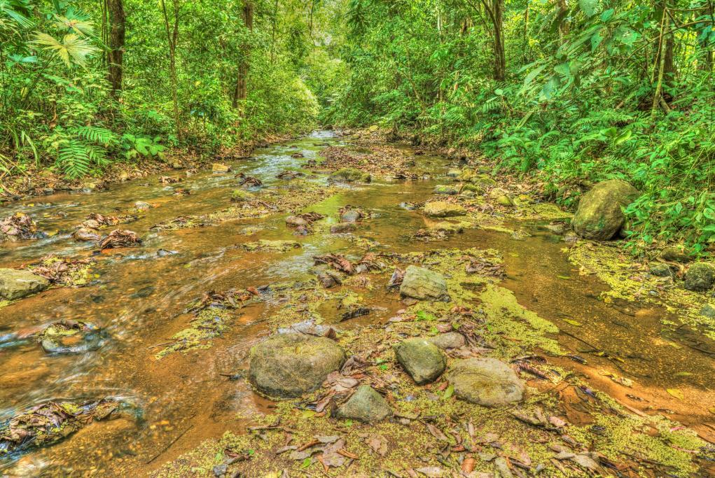 Parque Nacional de Carara  - Puerto Caldera - Costa Rica