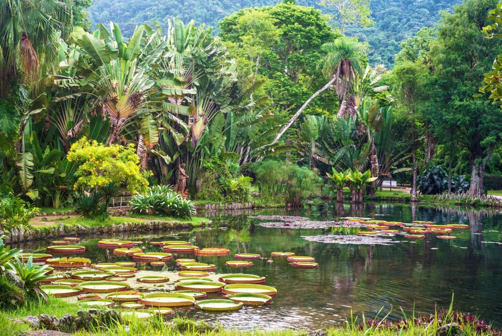 Jardín Botánico - Recife