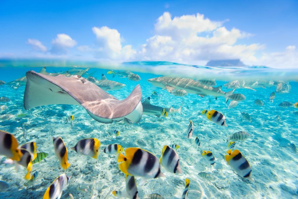 Bora Bora Lagoonarium - Bora Bora - Islas de la Sociedad