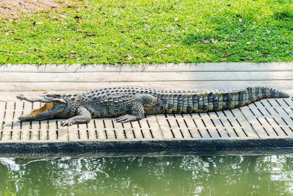Parque del Cocodrilo - Darwin